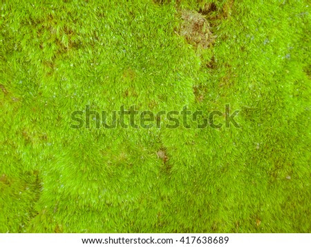 Moss Background And Texture. Forest Of Serbia Стоковые фотографии 417638689 : Shutterstock