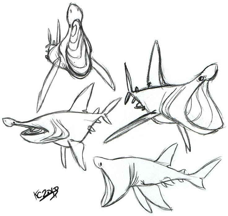 Goblin Shark Drawing at GetDrawings | Free download