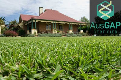 Which Instant Turf is the Best for Your Home? – Anco Turf – Medium