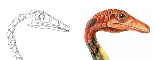 Compsognathus close up