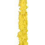 Forum Yellow Boa