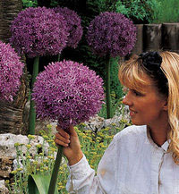 The New Vesey S Catalogue For Fall Bulbs Has Come Ann S Unfolding Life