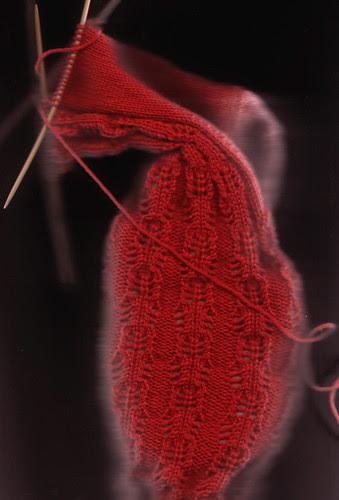 crustacean sock scan