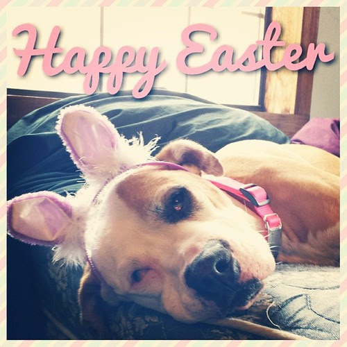 Happy Easter! #woof #bunnyears #dogsofinstagram #dogs #shiner #pack #Easter