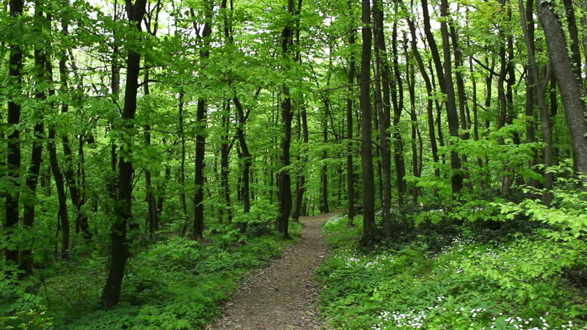 Image result for bright woods