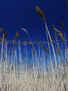 tall grasses in the autumn