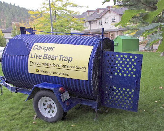 Bear scare in Rose Valley