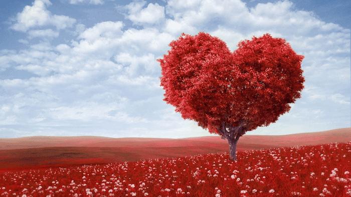Las 100 Mejores Frases De Amor Te Sorprenderan