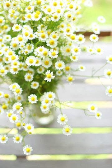 Chamomile Sensitive Skin Cleanser! - Home Made Beauty