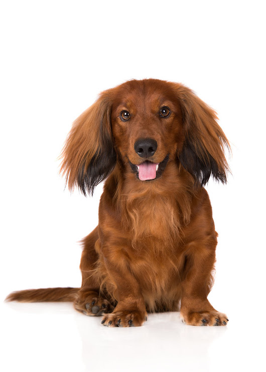 Everything You Need to Know About Managing a Long Haired Dog | Lucky Dawg Salon Grooming in California