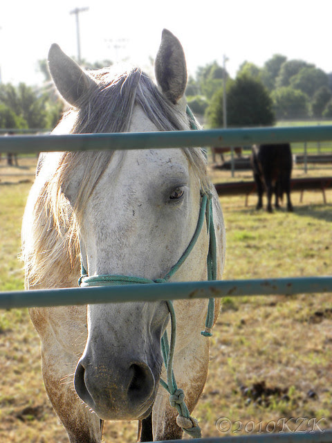DSCN6095 Horse