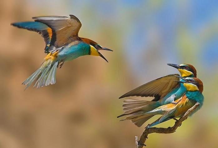 Bird_3 (700x474, 153Kb)