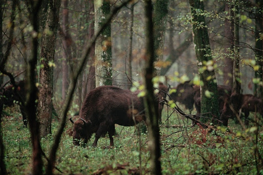 Polish scientists protest over plan to log in Białowieża Forest