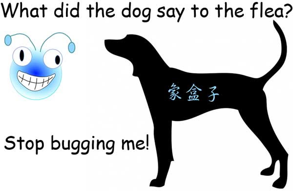 dog flea bug