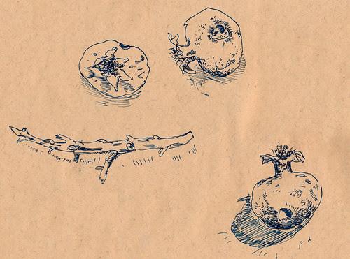 December 2011: Treasures by apple-pine