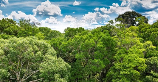 73 million trees to be planted in largest reforestation project ever