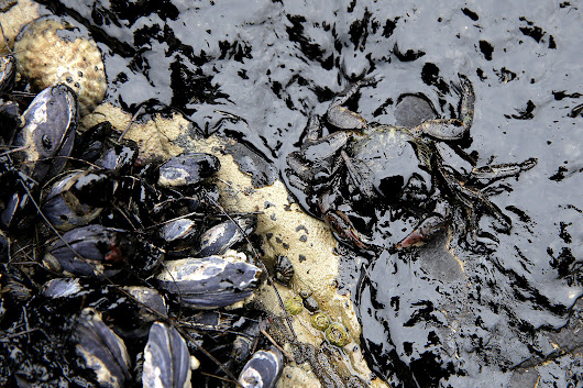 California Oil Spill: Biologists Eyeing Extent of Damage to Waters, Wildlife