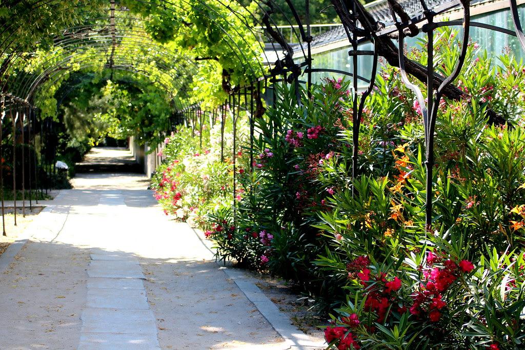 Un paseo florido