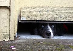 Bailey waits for Tara