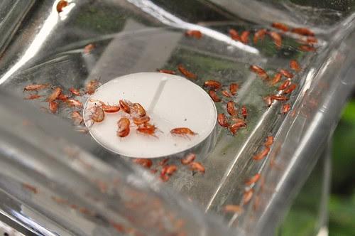 Raining Shrimps