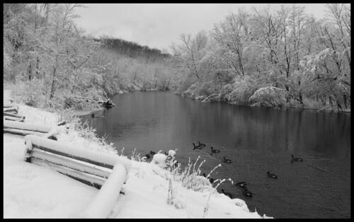 snowy huron