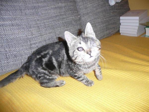 ataxiekatzen notfellchen kleine s e handicap kitty katze sucht ihre dosis. Black Bedroom Furniture Sets. Home Design Ideas