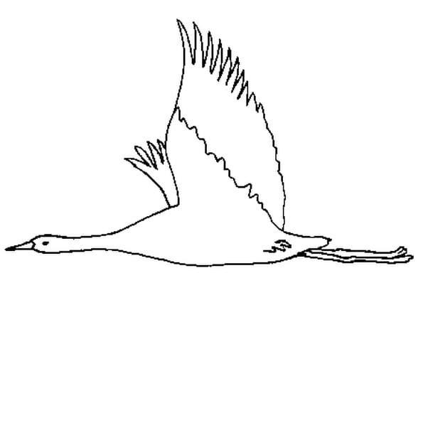 Comment Dessiner Des Oiseaux Qui Vole