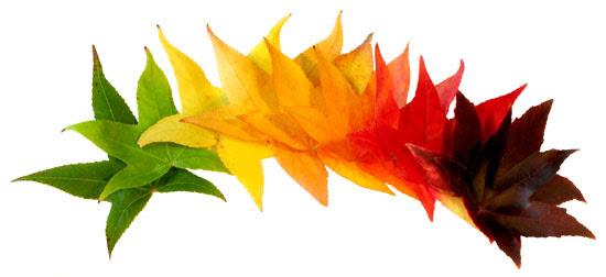Resultado de imagen de els colors de la tardor
