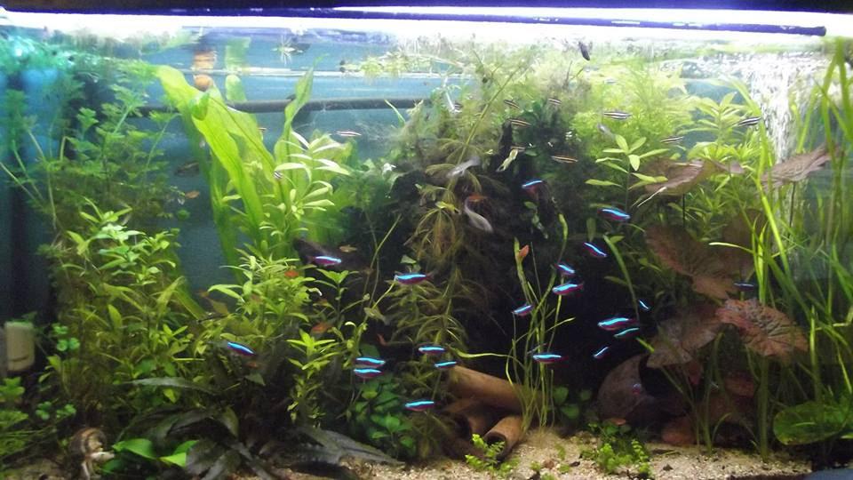 Akwarium środowiskowe Rośliny W Akwarium