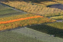 Orchard Patchwork