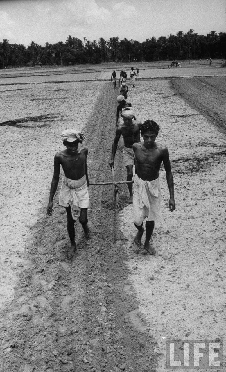 Poverty stricken farmers pulling an ancient plow through rice field.