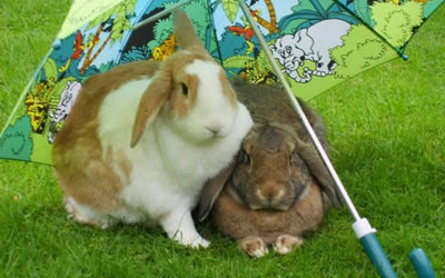 Summer Advice for Pet Rabbits | Bicester Vets