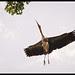 Burung yang terbang