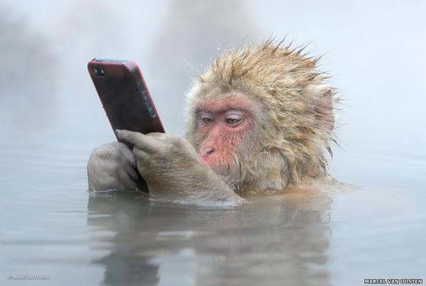 """Uma nova categoria do prêmio Wildlife Fotógrafo do Ano terá seu vencedor escolhido pelo público, em uma votação global online. Uma das finalistas é esta foto de Marsel van Oost, batizada de """"Update no Facebook"""".  (Foto: Marcel van Oosten/BBC)"""
