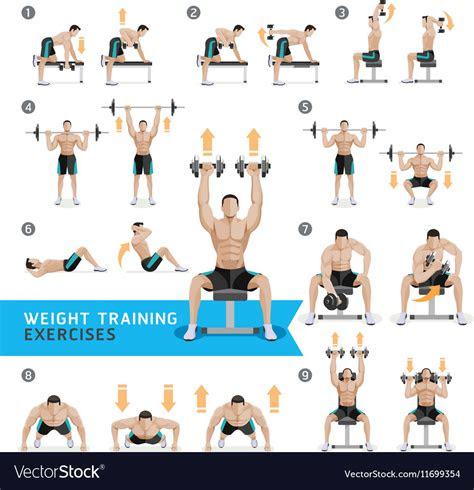 dumbbell exercises  workouts weight training vector image