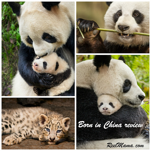 DisneyNature's Born in China: Pandas, snow leopards, and antelopes, oh my!