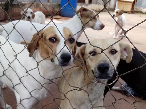 ONG atende, atualmente, 200 animais de rua (Foto: Associação Barretense de Animais/Divulgação)