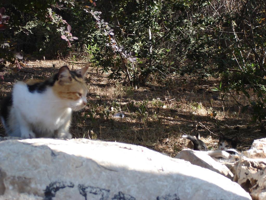 Momcat and kittens 3