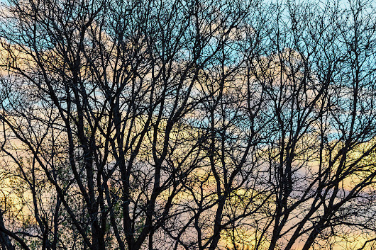 Tree Branches And Colorful Clouds by James BO Insogna