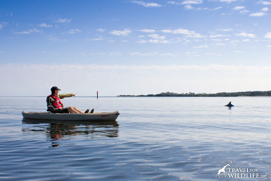 Why Cedar Key is our Favorite Place to go Kayaking With Dolphins in Florida - Travel For Wildlife