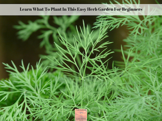 Learn What To Plant In This Easy Herb Garden For Beginners - Exotic Gardening