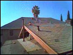 palmtree_roof_jan08