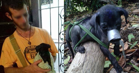 Jail with this abuser and torturer of animals in Cuba!