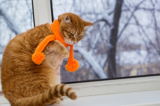 Cold Weather Pet Tips From Your Friends at Petcurean - Life With Lisa