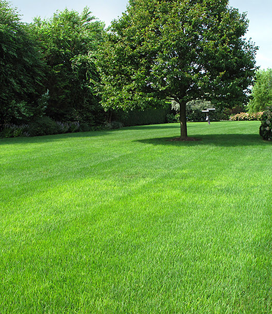 Regular Maintenance - The Key To A Thick Healthy Lawn - Land Graphics Inc