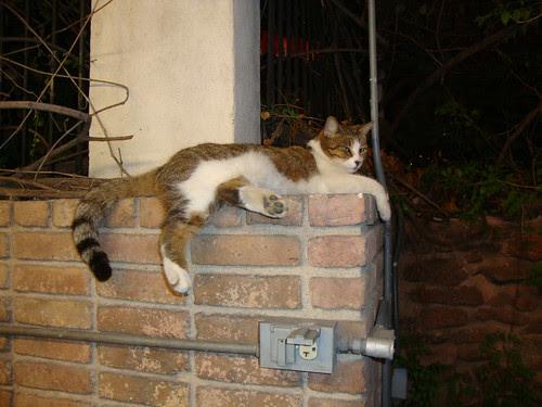Austin:  kitty cat (yet to join PR) celebrates PR day on South Congress