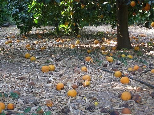orange fournes