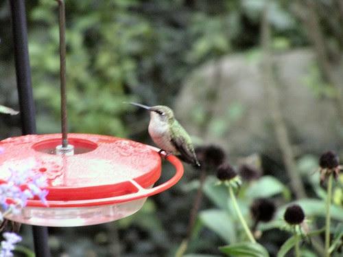 HummingbirdFeeder4