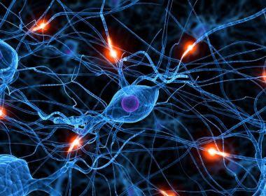Consumo regular de álcool pode impactar negativamente na produção de neurônios