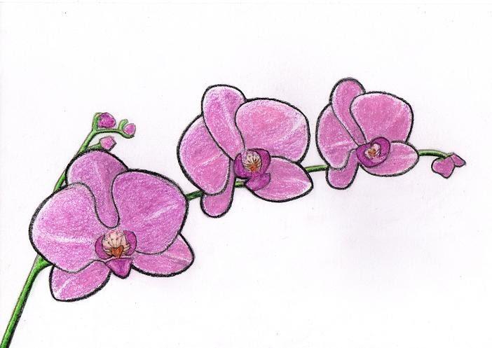 14 Gambar Bunga Anggrek Kartun Info Top